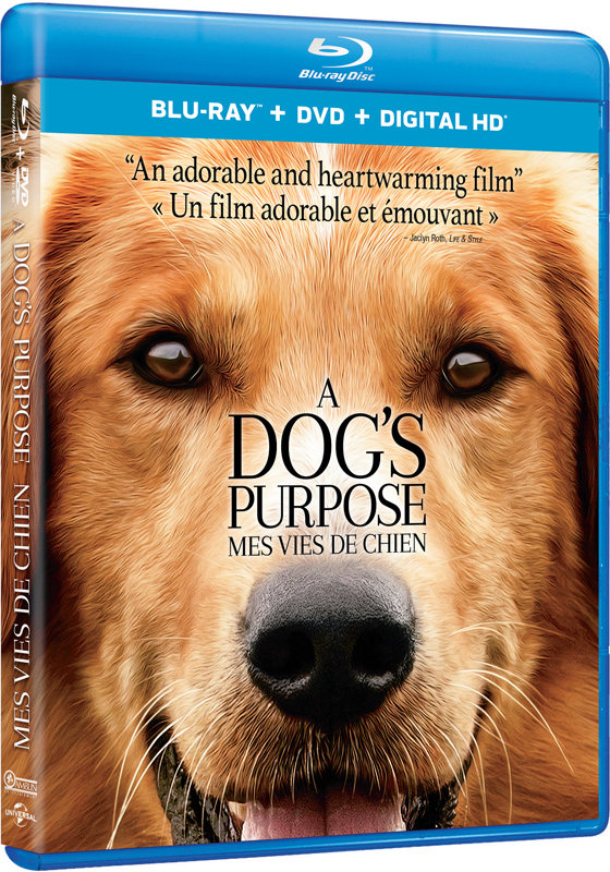 A Dog's Purpose on Blu-ray and DVD