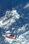 Loneliest-Whale